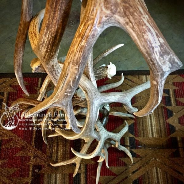 Mule deer and elk antler detail