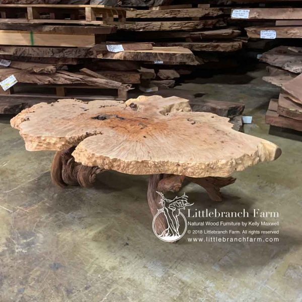 Live edge burl wood used as a rustic coffee table