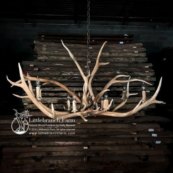 Elk antler shed chandelier