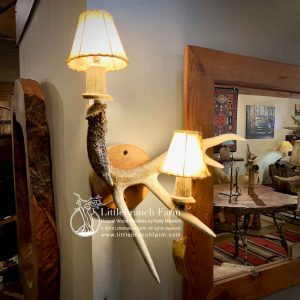 Whitetail deer antler sconce
